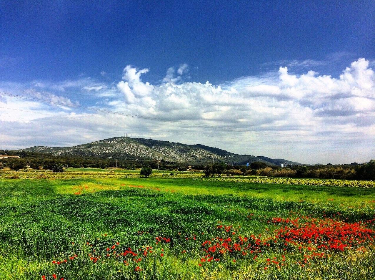 Naturaleza saludable: sumergirse en espacios verdes beneficia nuestra salud y bienestar