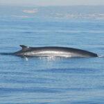 Tenemos un secreto: ¡Hay ballenas en la costa de Sitges y Vilanova!